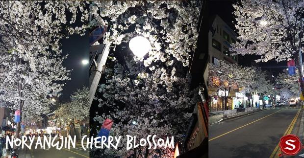 nrg cherry blossom.jpg